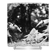 Amazon: Anteater Shower Curtain