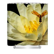 Amber Dragonfly Dancer Too Shower Curtain