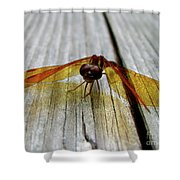 Amber Dragonfly Shower Curtain