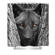 Amber Shower Curtain