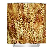 Amber Waves Of Grain 1 Shower Curtain