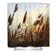 Amber Waves Of Pampas Grass Shower Curtain