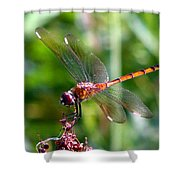 Amber Wing 2 Shower Curtain