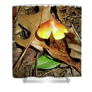 Amberina Mushroom - Tiny Jewel In The Forest Shower Curtain
