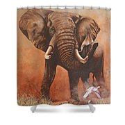 Amboseli Elephant Shower Curtain