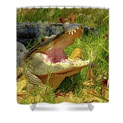 American Alligator Arizona Chapter Shower Curtain