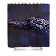 American Alligator Sleeping Shower Curtain