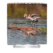 American Avocet Chick Shower Curtain