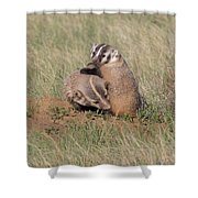 American Badger Cub Climbs On Its Mother Shower Curtain