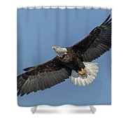 American Bald Eagle 2017-18 Shower Curtain