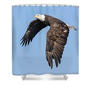 American Bald Eagle 2017-5 Shower Curtain