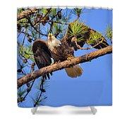American Bald Eagle 3 Shower Curtain