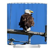 American Bald Eagle On Communication Tower Shower Curtain