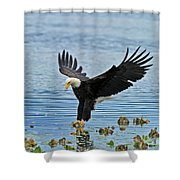 American Bald Eagle Sets Down On Fish Shower Curtain
