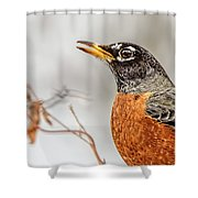 American Beauty Shower Curtain