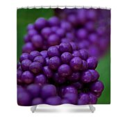 American Beautyberry Shower Curtain