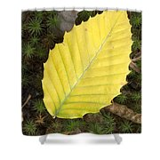 American Beech Leaf Shower Curtain