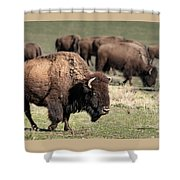 American Bison 5 Shower Curtain by James Sage