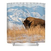 American Bison In Front Of The Rocky Mountains Shower Curtain