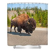 American Bison Sharing The Road In Yellowstone Shower Curtain