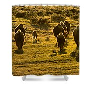 American Bison Sunset March Shower Curtain