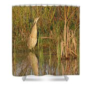 American Bittern Close To Shore Shower Curtain