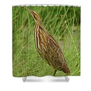 American Bittern Looking Up Shower Curtain