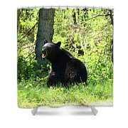 American Black Bear Shower Curtain