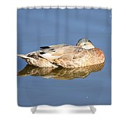 American Black Duck Snoozing Shower Curtain