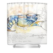 American Blue Lobster Shower Curtain