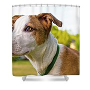 American Breed Brown Eyes Shower Curtain