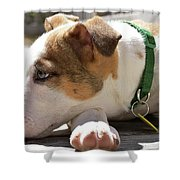 American Breed Puppy Shower Curtain