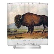 American Buffalo, 1846 Shower Curtain