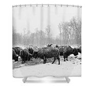 American Buffalo #2 Shower Curtain
