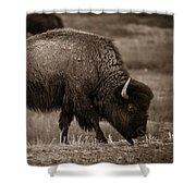 American Buffalo Grazing Shower Curtain