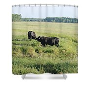 American Cattle Shower Curtain