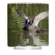 American Coot Adult And Juvenile Shower Curtain