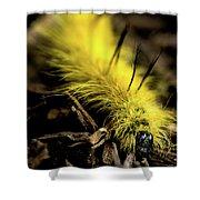 American Dagger Moth Caterpillar Shower Curtain