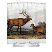 American Elk, 1846 Shower Curtain