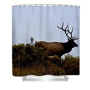 American Elk Shower Curtain