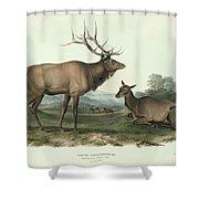 American Elk Shower Curtain