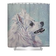 American Eskimo Dog In Snow Shower Curtain