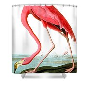 American Flamingo Shower Curtain by John James Audubon