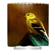 American Gold Finch In Texture Shower Curtain