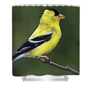 American Golden Finch Shower Curtain