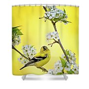 American Goldfich Male Shower Curtain
