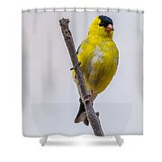 American Goldfinch Front Shower Curtain