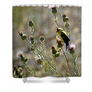 American Goldfinch Having Lunch On Bakery Hill 2 Shower Curtain