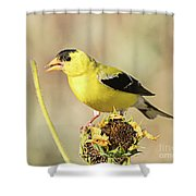American Goldfinch On Sunflower Shower Curtain