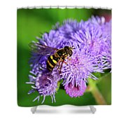 American Hoverfly Shower Curtain